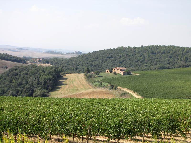 Azienda Agricola Trequanda 93